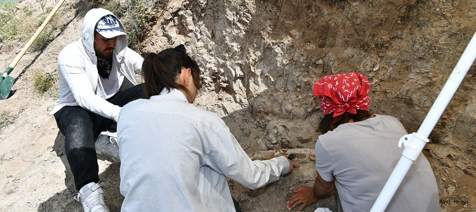 7.5 milyon yıllık fosilin bulunmasının ardından Kazı çalışmaları yeniden başladı.